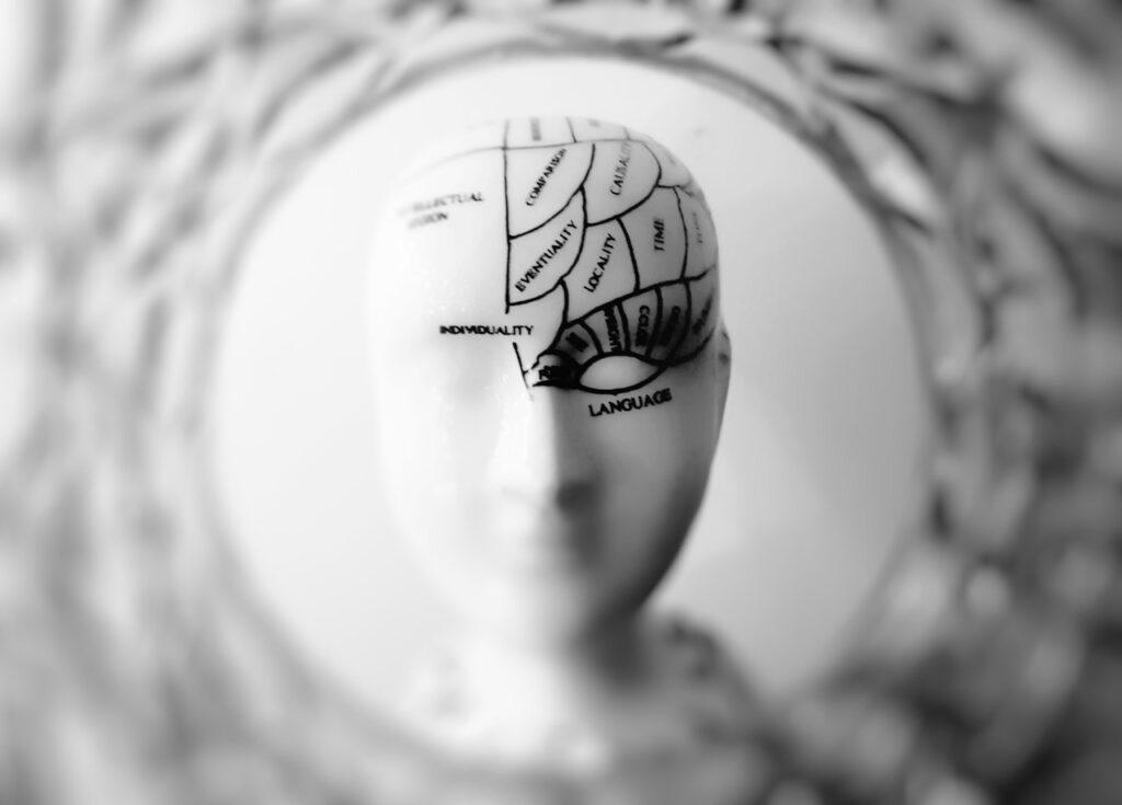 рисунок мозга на манекене