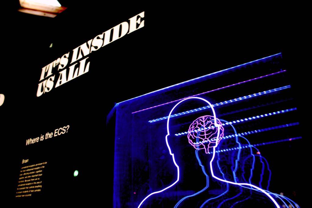 световая вывеска с мозгом