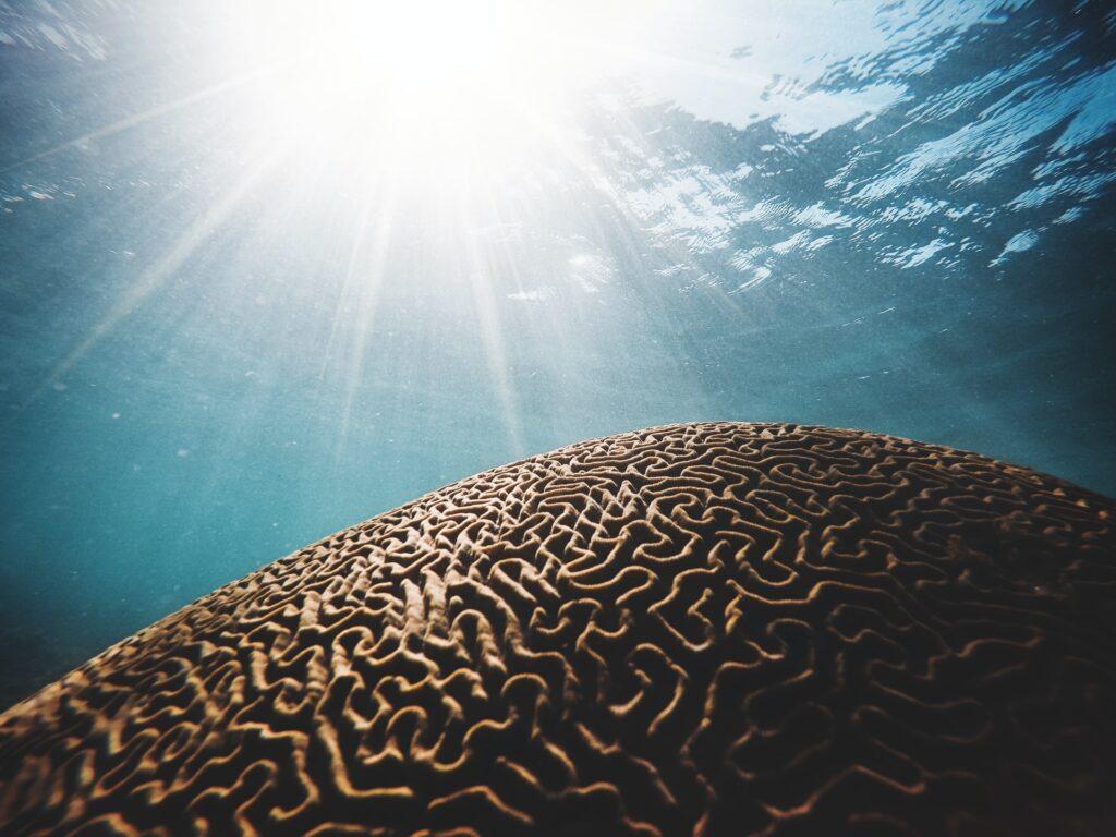 артефакт в океане