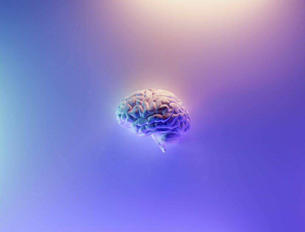 модель мозга