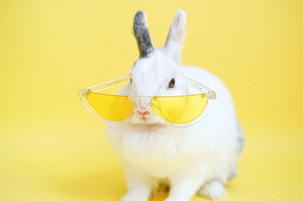 кролик в очках
