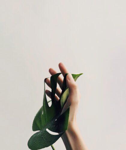 листочек на руке