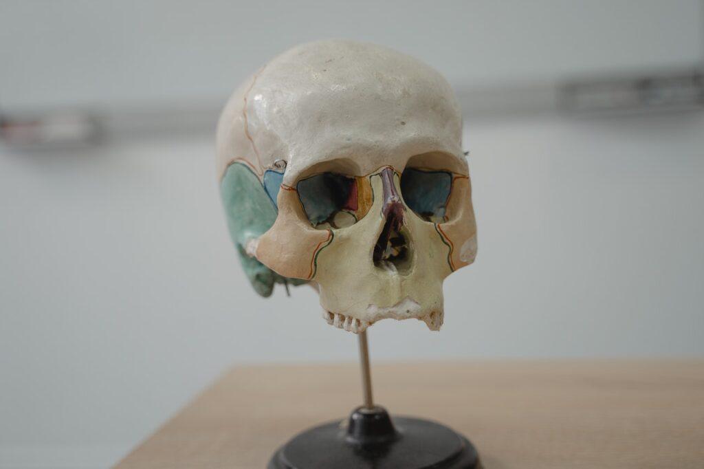 красивый череп