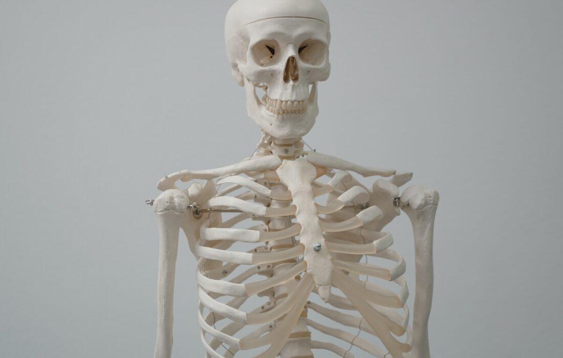 красивый скелет