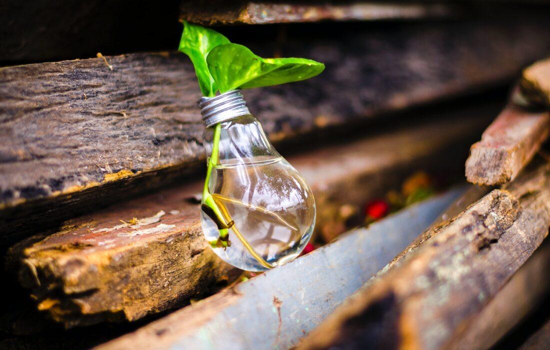 зелень в лампочке