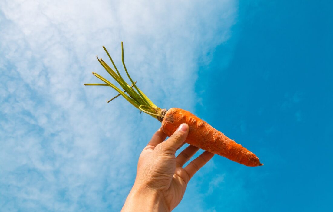 морковь в руке