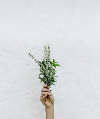 растение в руке