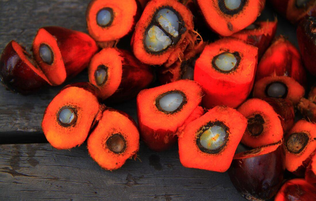 пальмовые плоды