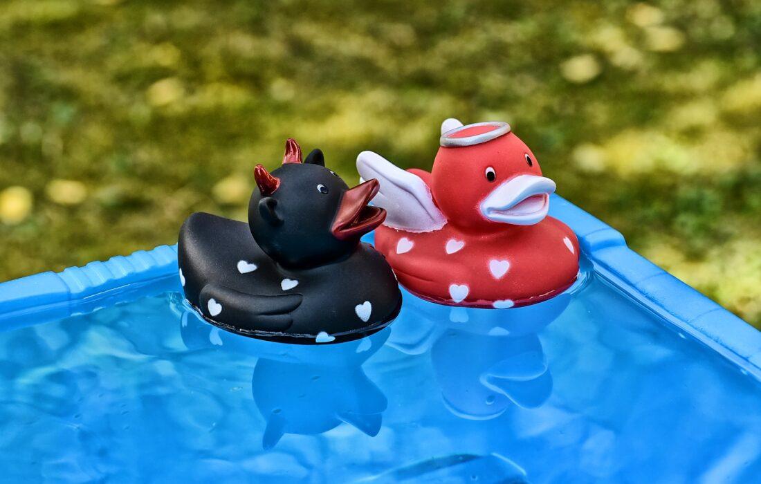 уточки в бассейне