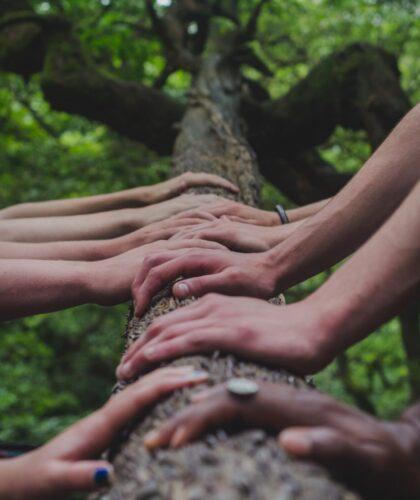 руки на дереве